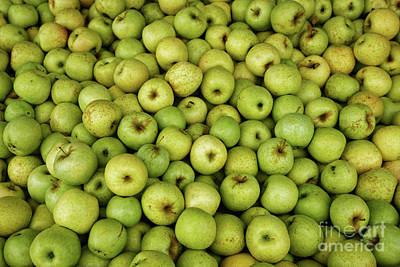 Photograph - Mutzu Apples by Paul Mashburn