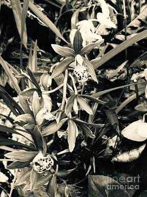 Photograph - My Arrangement, Tn. by Robin Lewis