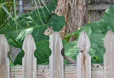 Photograph - My Backyard Squirrel by Carol  Bradley