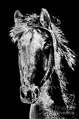 Photograph - My Beloved Horse Dillon by Joann Long