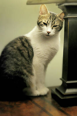 Gray Tabby Photograph - My Best Friend by Diana Angstadt