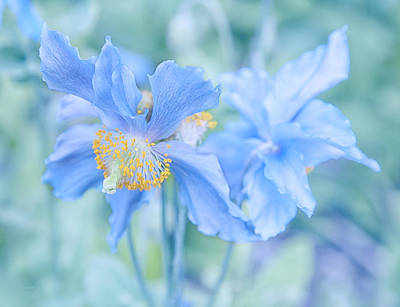 Photograph - My Blue Heaven by Theresa Tahara