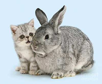 Photograph - My Bunny Little Friend by Warren Photographic
