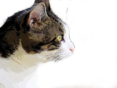 Digital Art - My Cat by Craig Walters