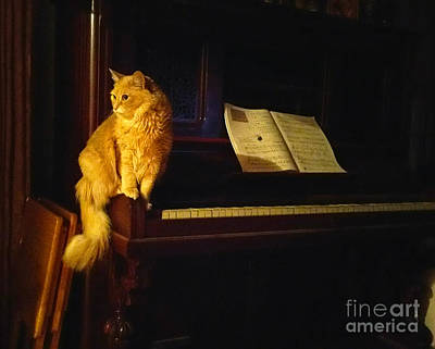 Piano Photograph - My Cat Mozart by Broken Soldier