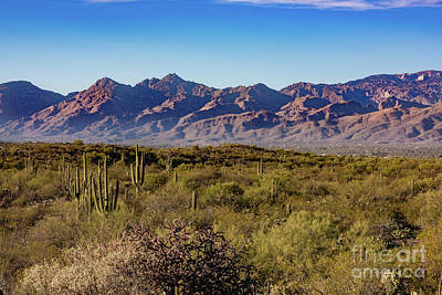 Photograph - My Catalina Mountains by David Levin