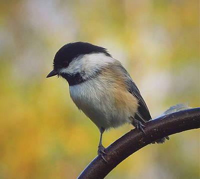 Chickadee Photograph - My Cheep Date by Karen Cook