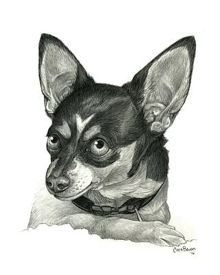 Eyes Detail Drawing - My Chihuahua by Cara Bevan