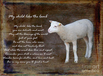 Photograph - My Child Like The Lamb by Nina Silver
