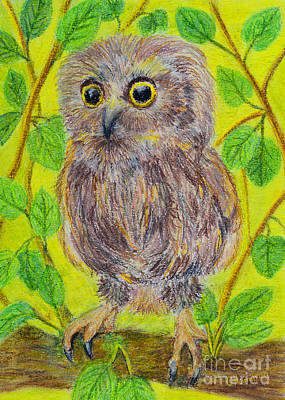 My Confused Little Owl Original by Olga Hamilton
