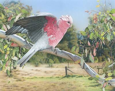 Painting - My Country - Galah by Frances McMahon