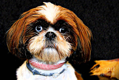 Maltese Photograph - My Cute Face by Mariola Bitner