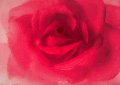 Photograph - My Darling Rose by The Art Of Marilyn Ridoutt-Greene