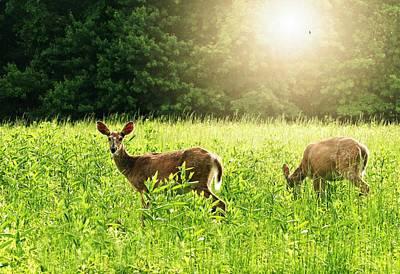 Two Deer Photograph - My Deer Friends by Diana Angstadt