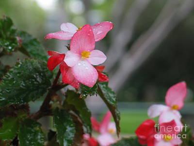 Begonia Garden Painting - My English Garden 8 by Hazel Holland