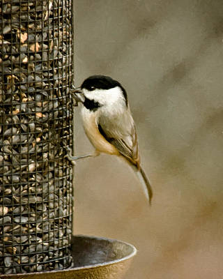 Chickadee Photograph - My Favorite Perch by Lana Trussell