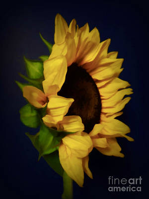 Photograph - My Favorite Sunflower . A Portrait by Renee Trenholm