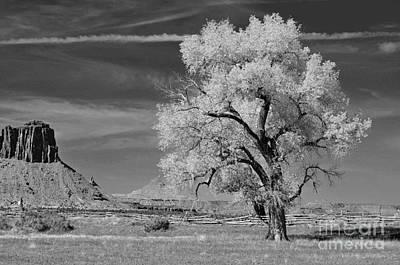 Photograph - My Favorite Tree  by Juls Adams