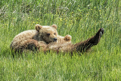 Photograph - My Foot's So Pretty, Oh So Pretty - Bear Cubs, No. 2 by Belinda Greb