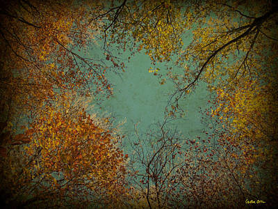 Photograph - My Forest I by Cristina Ortiz