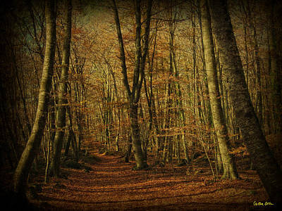 Photograph - My Forest II by Cristina Ortiz