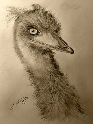 Emu Drawing - My Friend Emu by Jose A Gonzalez Jr