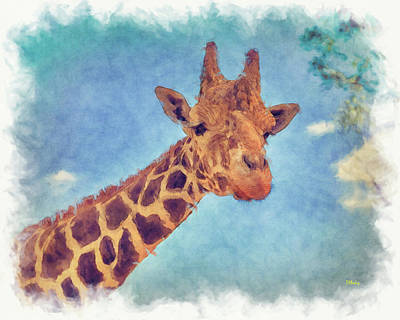 Photograph - My Friend The Giraffe by John M Bailey
