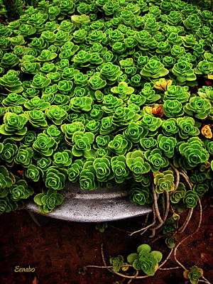 Photograph - My Garden by Eena Bo