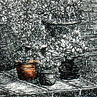Drawing - My Garden - Pot Plants by VIVA Anderson