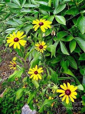 Photograph - My Garden Rudbeckia by Marcia Lee Jones