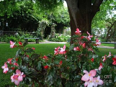 Begonia Garden Painting - My English Garden 2 by Hazel Holland