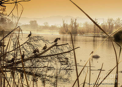 Photograph - My Golden Pond 2 by Scott Parker