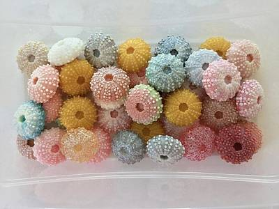 Photograph - My Handmade Soap Sea Urchins by Patricia E Sundik