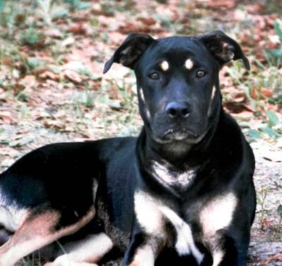 Photograph - My Handsome Bulldog Brutus by Belinda Lee