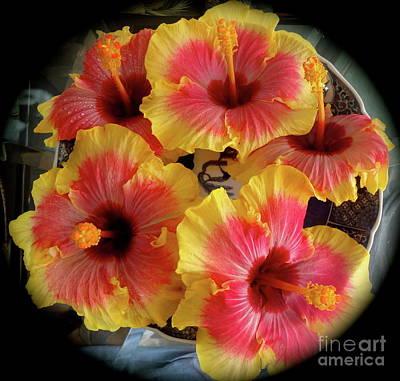 My Hibiscus Garden Art Print