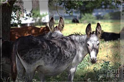 Donkey Digital Art - My House My Rules by Ella Kaye Dickey
