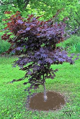 My Japanese Maple Tree Original by Marsha Heiken