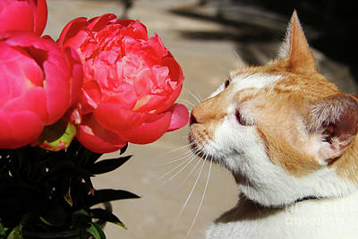 My Kitty In Love With A Peony Art Print by Mariola Bitner
