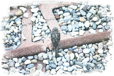Photograph - My Little Bird by Donna L Munro