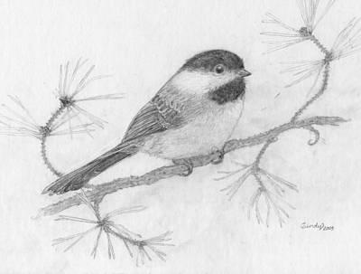 Drawing - My Little Chickadee by Cynthia  Lanka