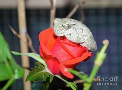 Photograph - The Frog And Rose by Donna Brown