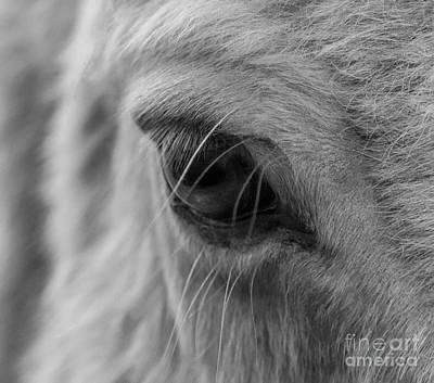My Little Pony Photograph - My Little Pony by Sandra Cockayne