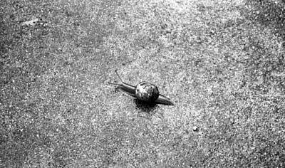 Photograph - My Little Snail Friend by Teri Schuster