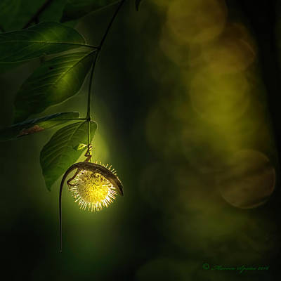 Lizard Photograph - My Little World by Marvin Spates