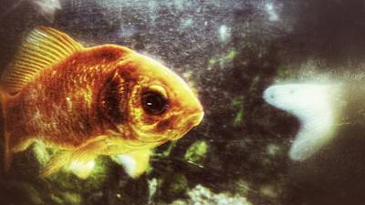 Print featuring the photograph My Littlest Fish by Isabella F Abbie Shores FRSA