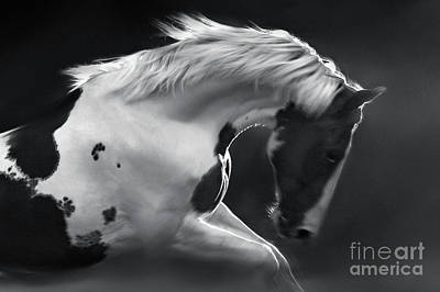 Photograph - My Lovely Horse by Dimitar Hristov