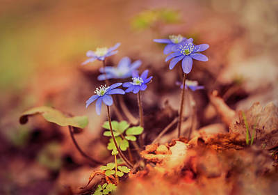 Photograph - My Magic Garden With Blue Liverworts by Jaroslaw Blaminsky
