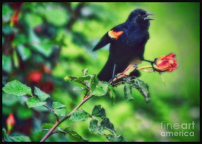 Photograph - My Morning Song by Elizabeth Winter