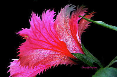 Digital Art - Palm Springs Flower My Name Is Wow by Sherri's - Of Palm Springs