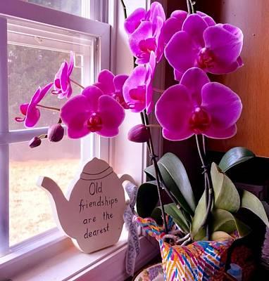 My Orchids Art Print